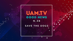 Good News - N.38 - Save the dogs
