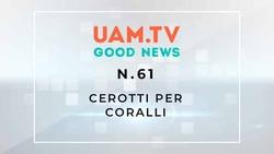 Good News - N.61 - Cerotti per coralli