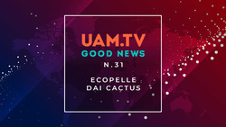 Good News - N.31 - Ecopelle dai cactus