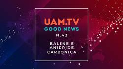Good News - N.43 - Balene e anidride carbonica