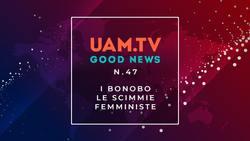 Good News - N.47 - I bonobo - Le scimmie femministe
