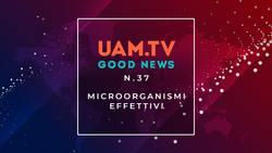 Good News - N.37 - Microorganismi effettivi